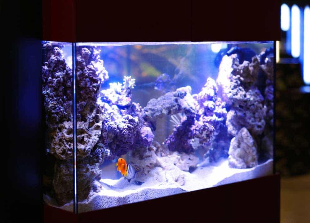 Mon tout premier aquarium guide pour bien d buter - Aquarium changer l eau ...