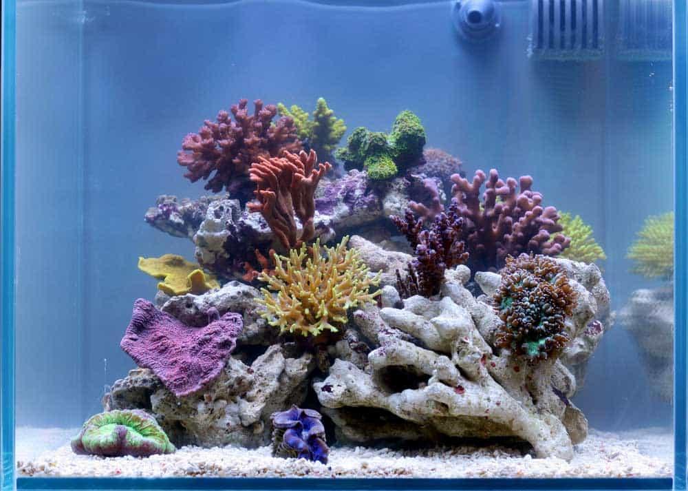 Decoration Aquarium Amazon