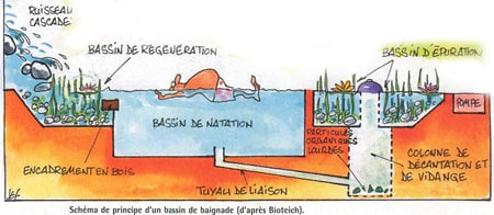 Avoir une piscine naturelle chez soi avantages et inconv nients - Piscine ecologique prix ...
