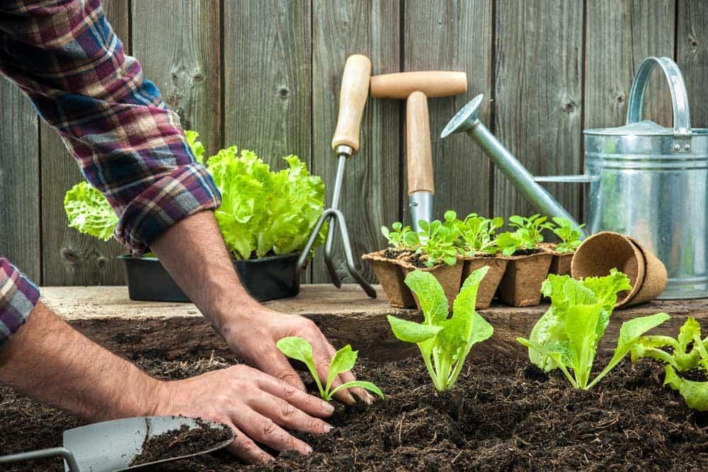 potager planter