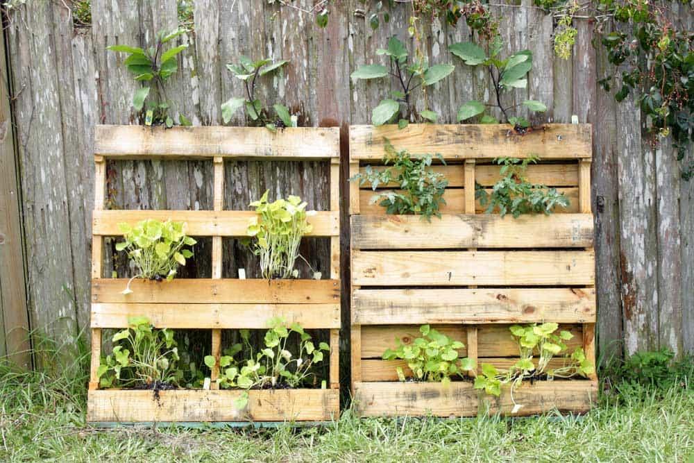 jardin vertical palettes