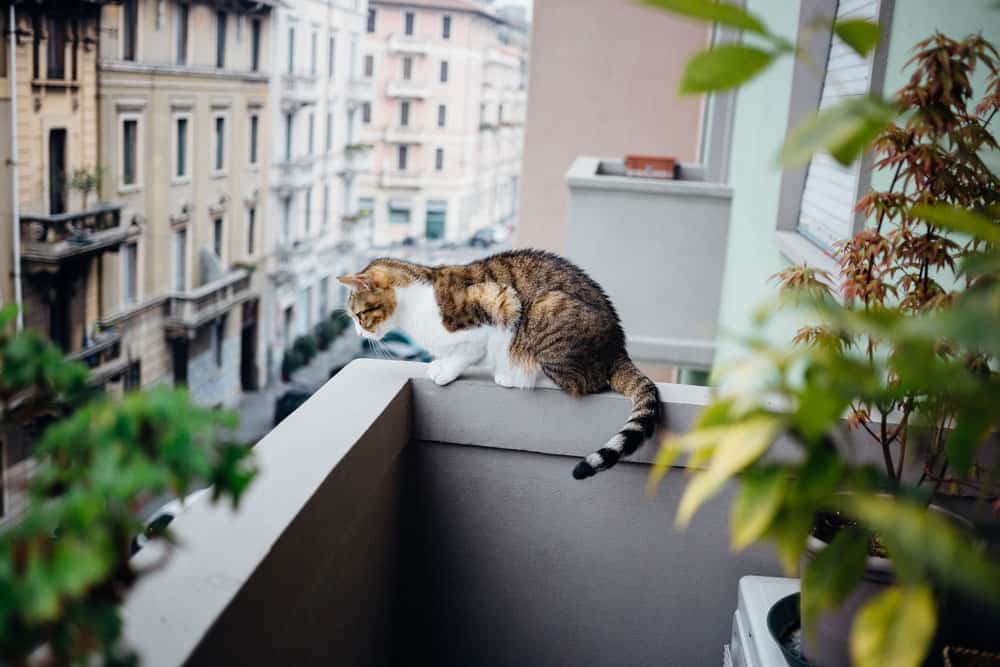 chat appartement