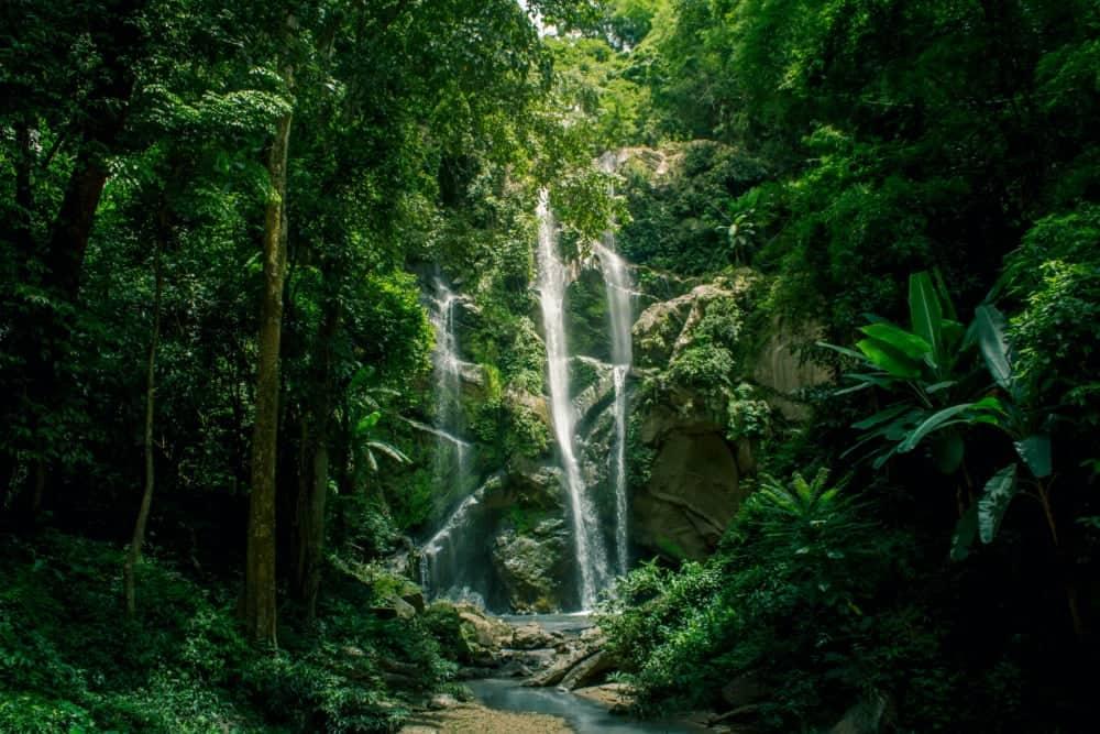 cascade forêt