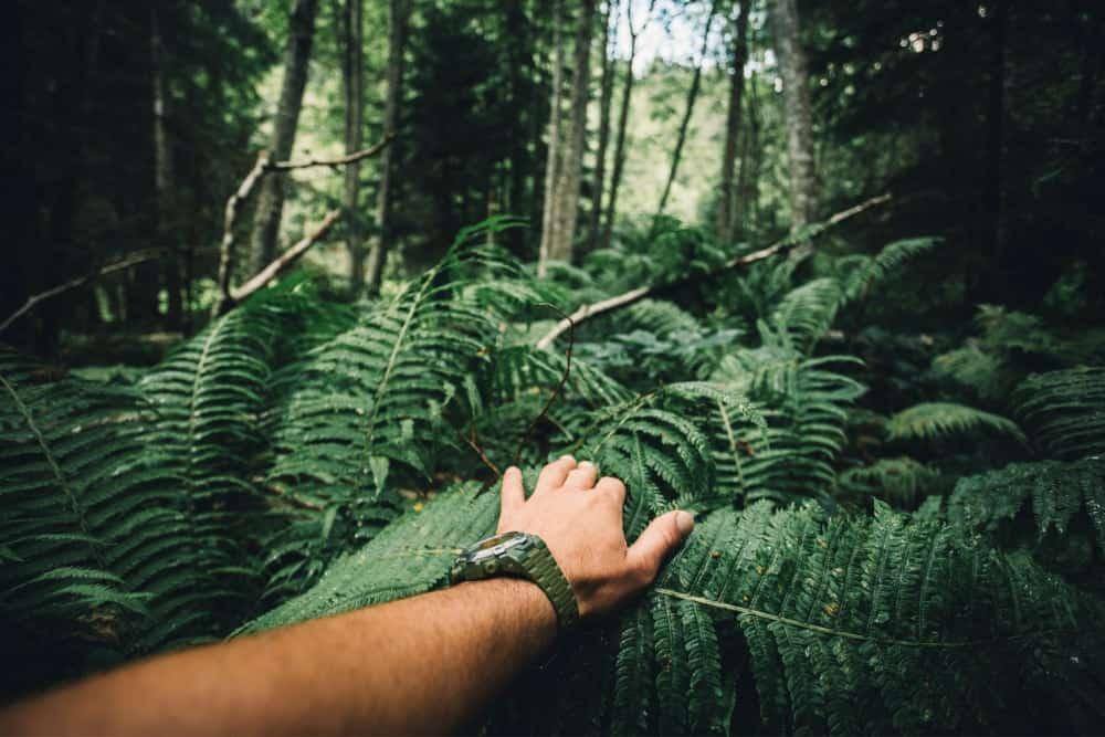 découverte forêt